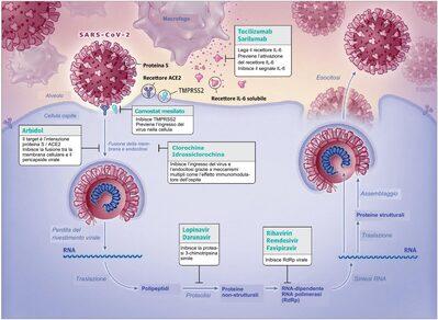 Rappresentazione schematica del ciclo virale di SARS-CoV-2 e potenziali target per il trattamento farmacologico